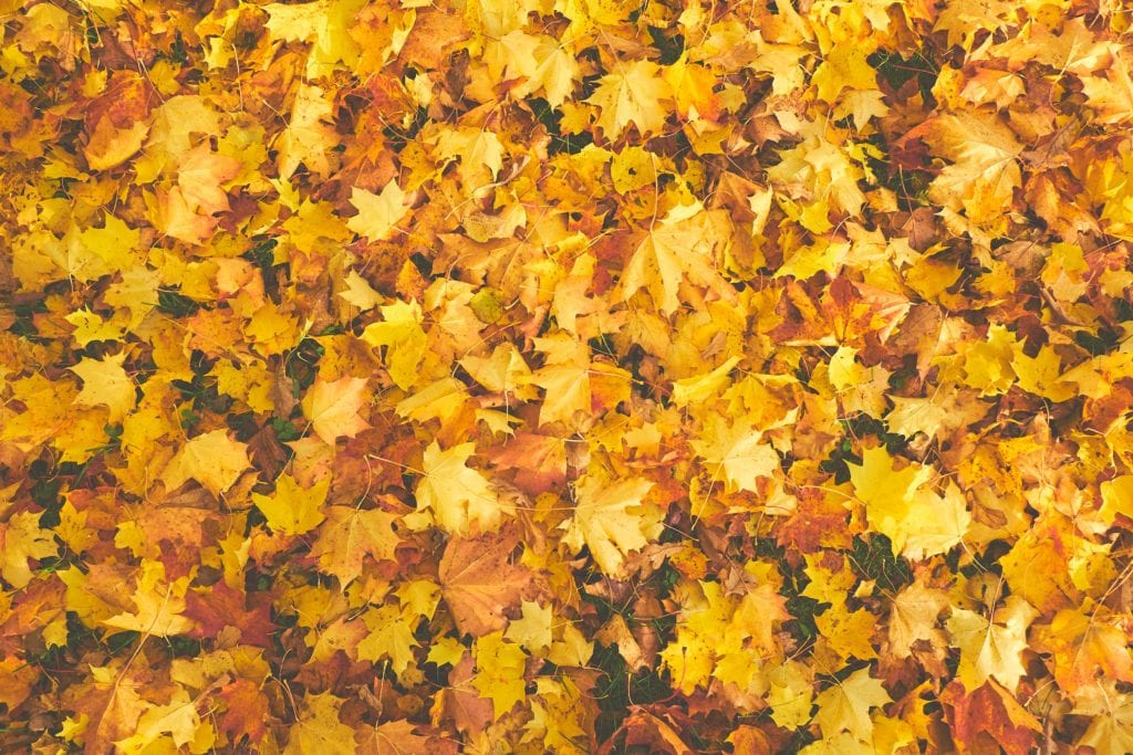 These five fall chores will extend the life of your home! Put on a flannel work-shirt in some autumnal colors, and click the photo to read our latest blog post. Let's check some tasks off our to-do list! Yay, productivity!